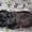 Щенки грифона – веселые домовята #444088