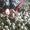 продам   крупный   чеснок    урожая    этого    года #1122020