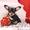Вам собачку Той-Терьер -? ( супер- пупер -мега- звер?) #483233
