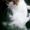 Разумная кошечка Китти в добрые руки #1512129