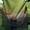 Продам кукурудзу ЕВРАЛІС  ЕС СЕНСОР ФАО 370 #1591857