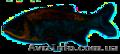 рыба сушонная и жывая - Изображение #2, Объявление #1079332