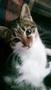 Разумная кошечка Китти в добрые руки