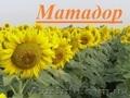 Насіння соняшнику Матадор